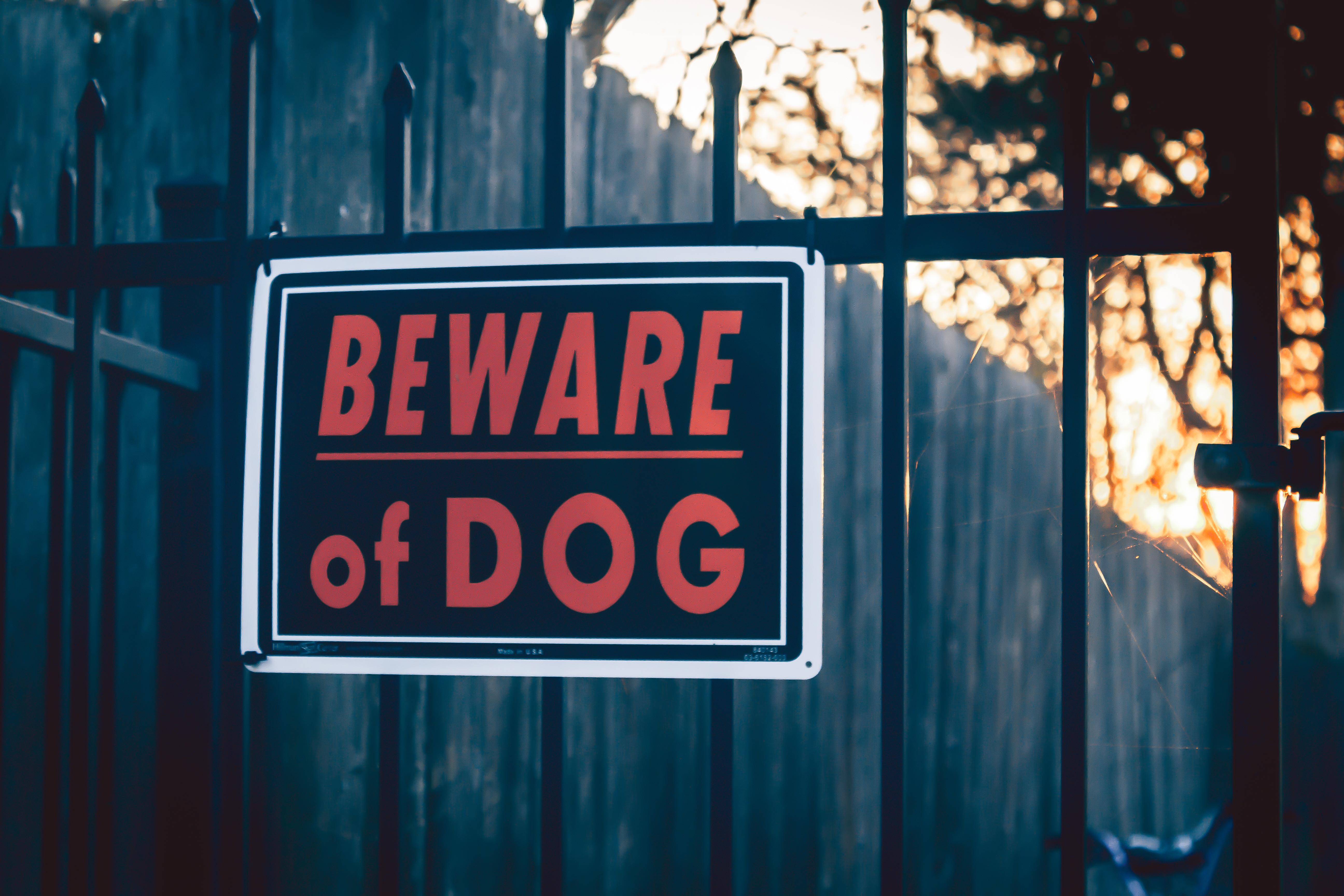 GettyImages 941051032 Handling Dog Bites in Albuquerque